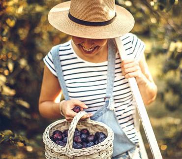 Saiba quais são as frutas da primavera!