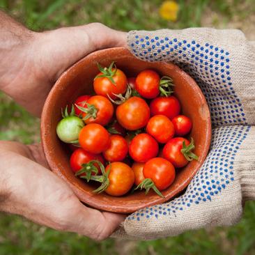 Aprenda a fazer uma horta em casa!